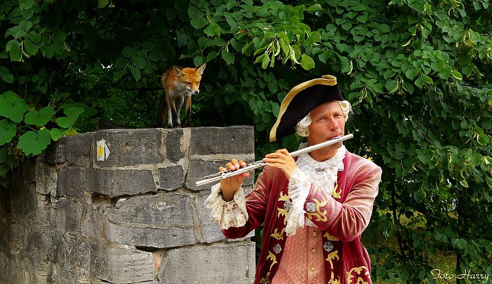 Nicht nur Schlangen,auch dieser Fuchs ist in Sanssouci von Flötentönen fasziniert.