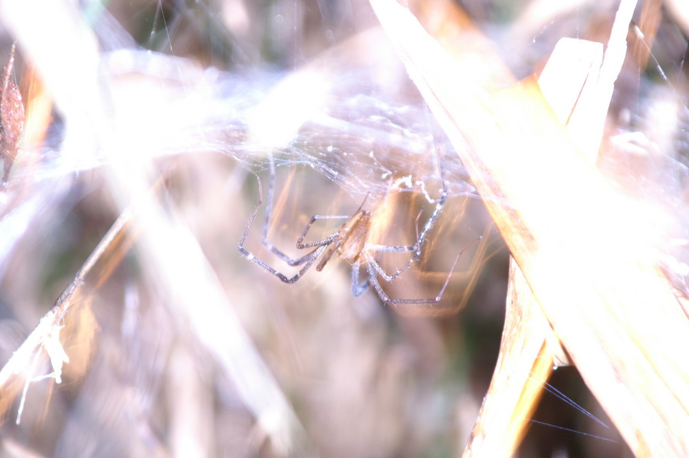 """Nicht """"unterbelichtete"""" Spinne"""