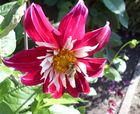 Nicht verzweifeln, sie kommt ja wieder, die schöne Jahreszeit voller Blüten und Insekten.