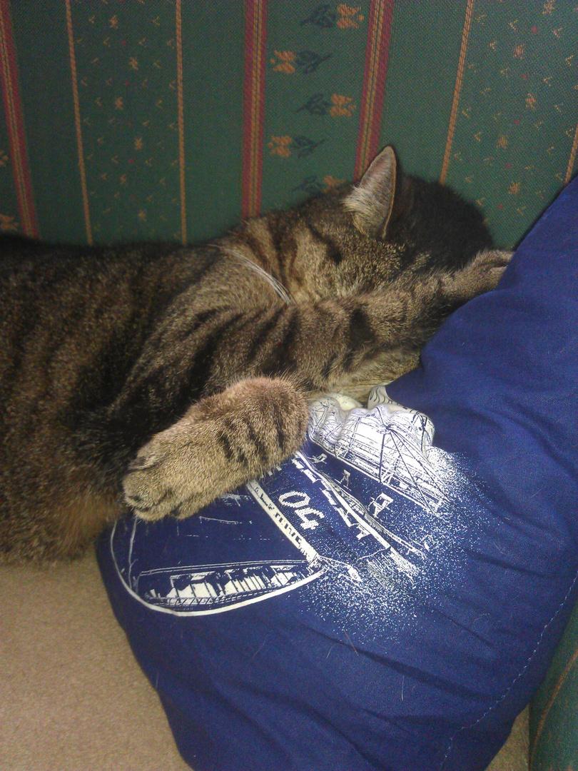nicht wecken! ich schlafe auf schalke....................