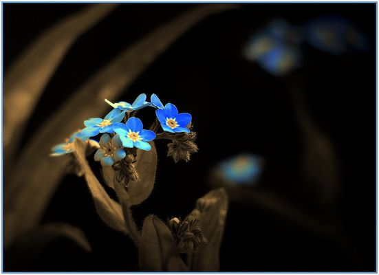 Nicht zu vergessendes Blau