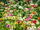 Nichteuropäische Blumenwiesen