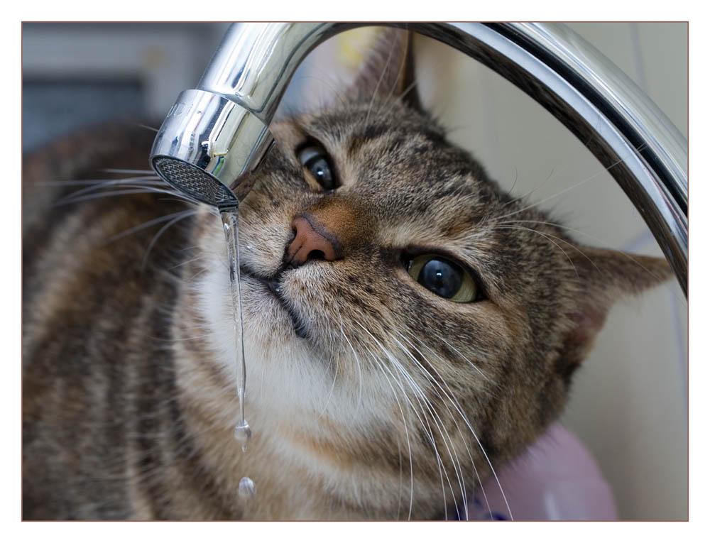 Nicki beim Wassersaufen