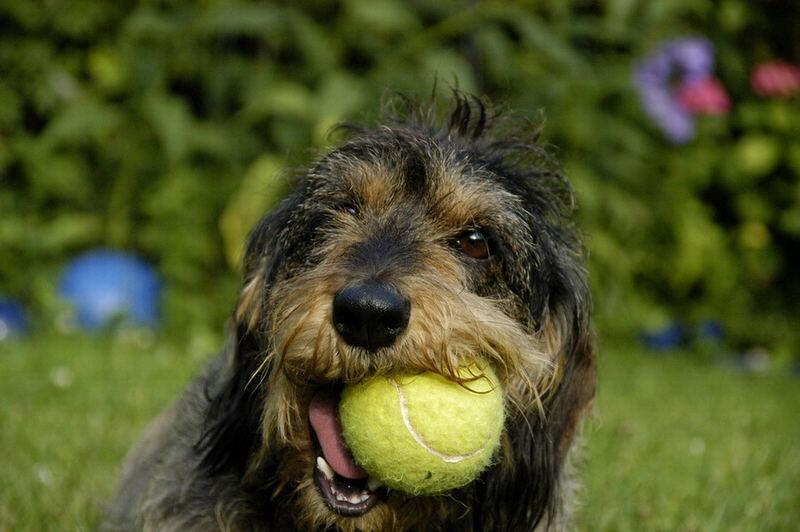 Nicky mit Tennisball 1