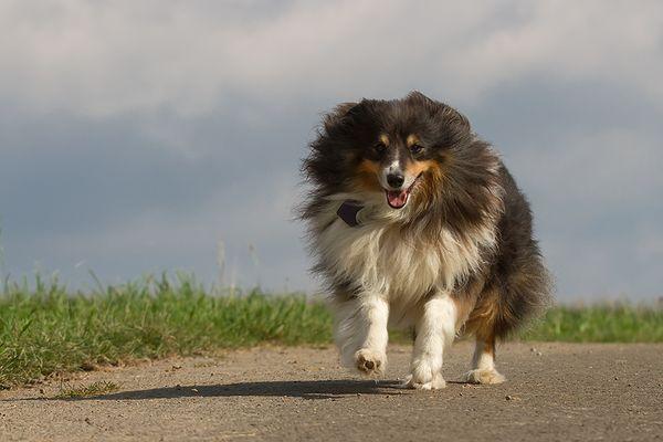 Nico, unser Nachbarhund
