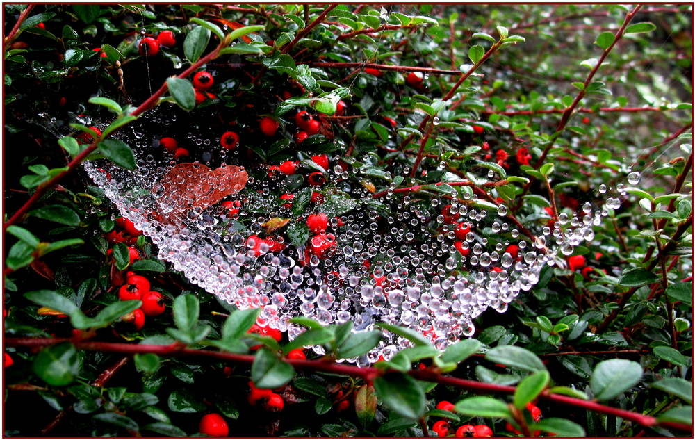 nid de bulles