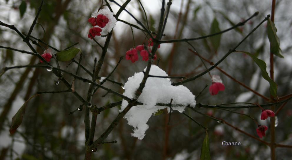 nid de neige