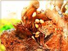 nido de caracoles --