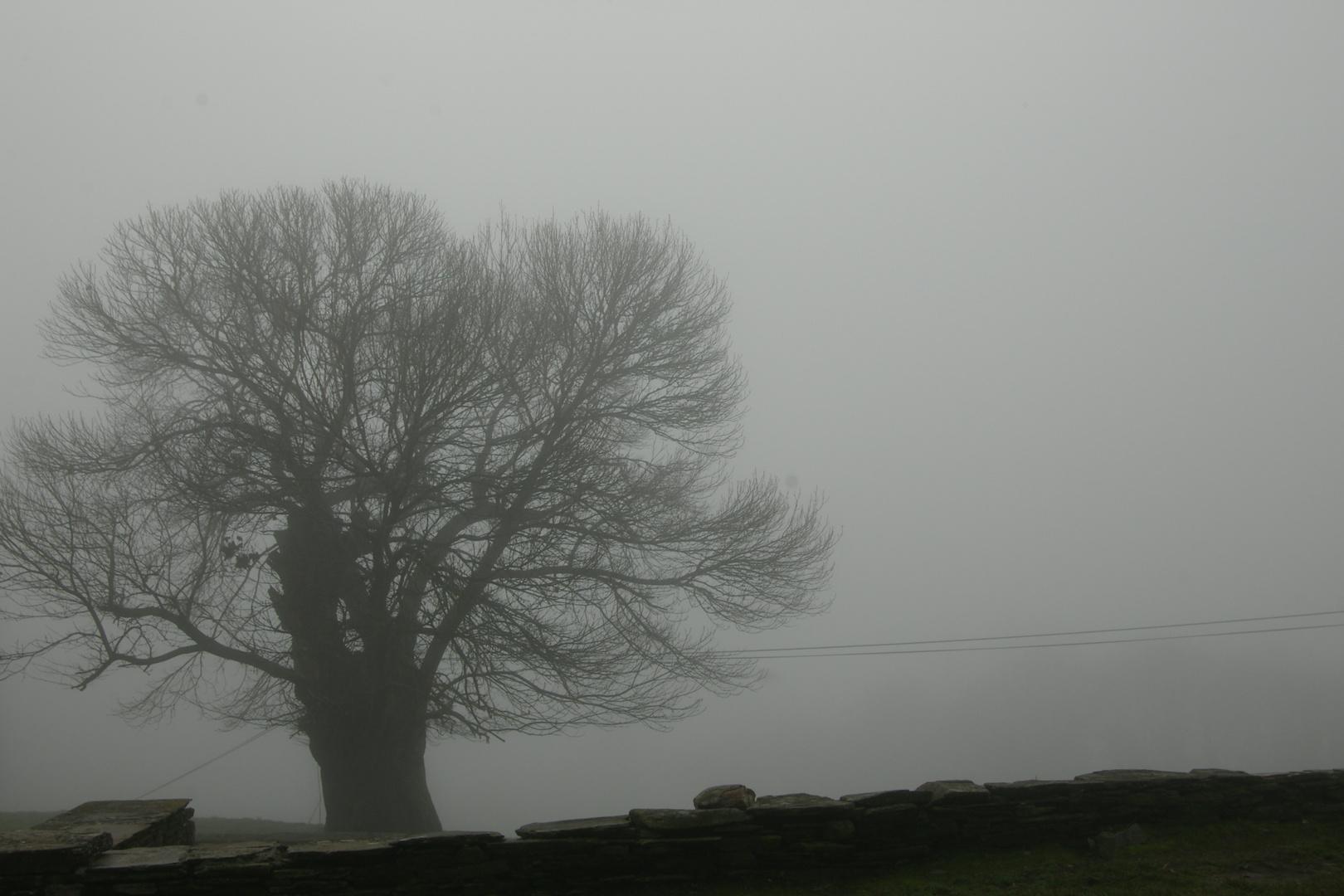 niebla 006