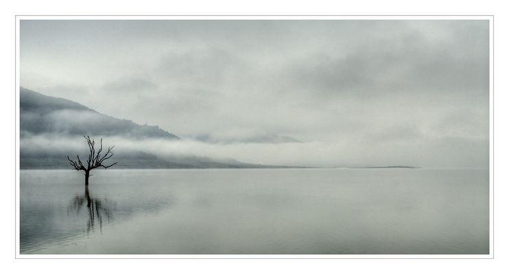 Niebla 2