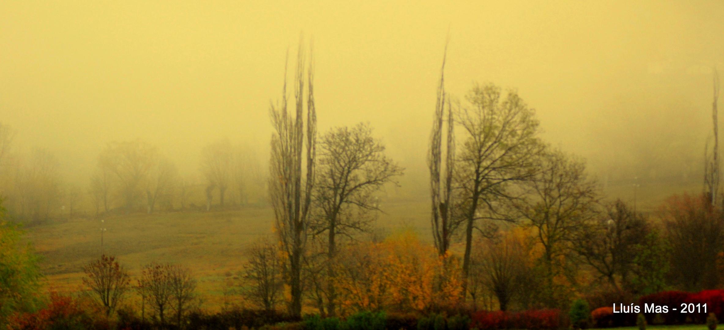 Niebla baja