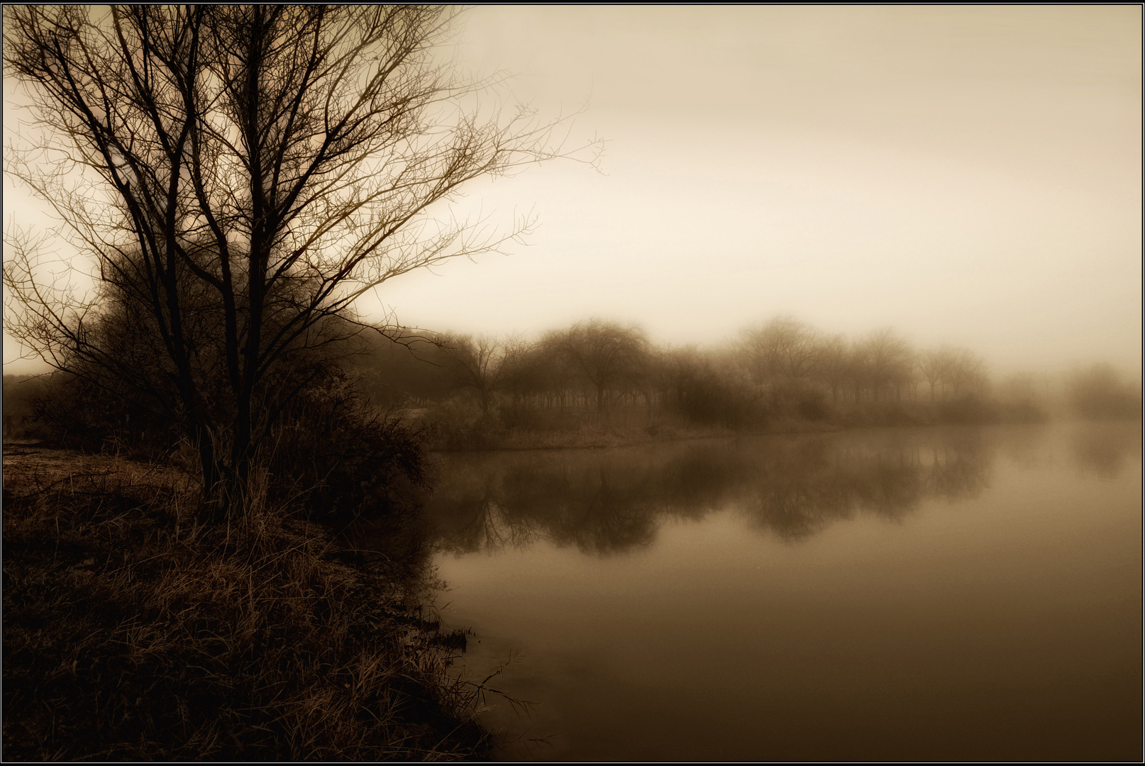 Niebla en el pantano