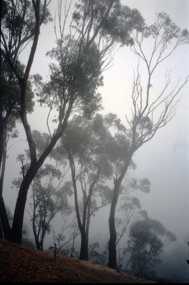 Niebla en las Blue Mountains