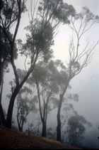 Niebla en las Blue Mountains