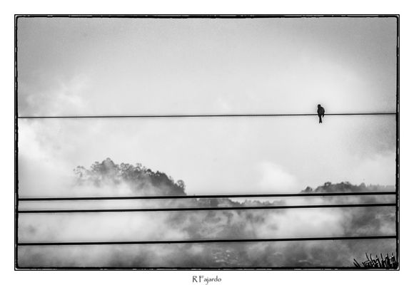 Niebla temprana
