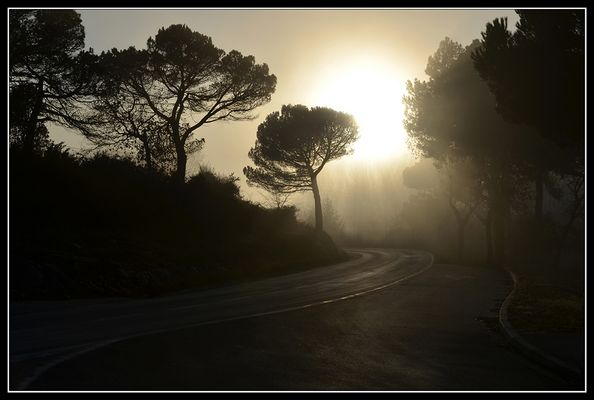 Niebla vespertina