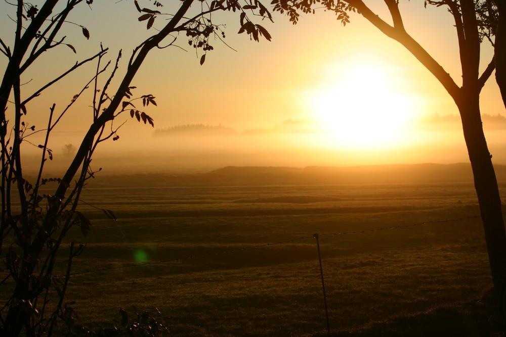 Nieblum im Morgennebel 2