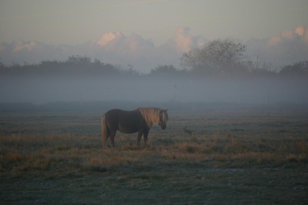 Nieblum im Morgennebel 3