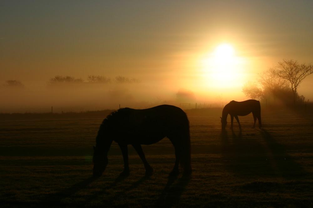 Nieblum im Morgennebel 4