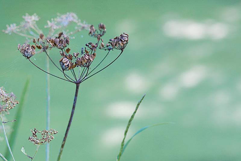 Niederrhein - Naturpark Schwalm Nette - Fotoatelier Natur