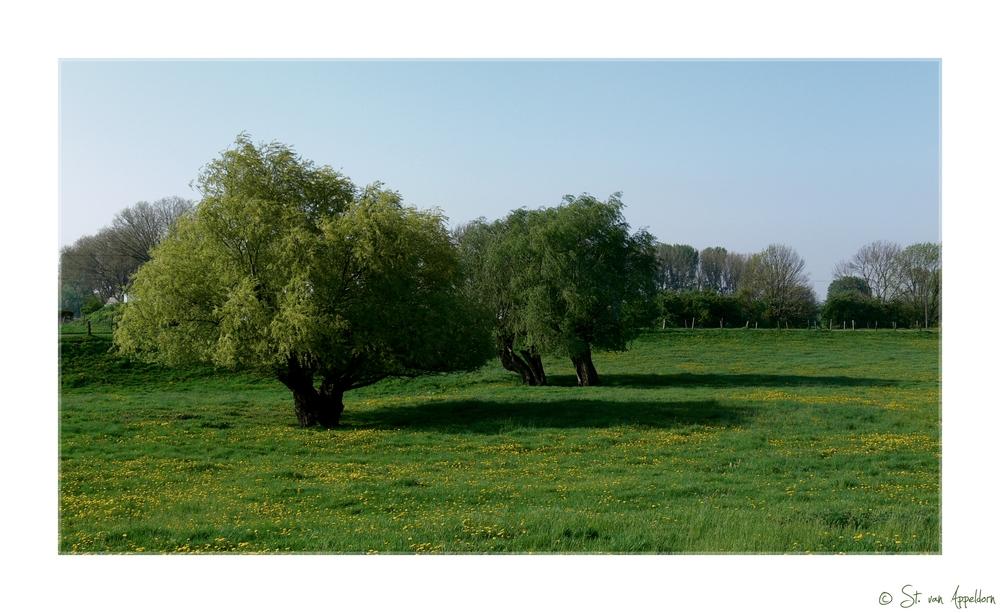 niederrheinische Wiesen...