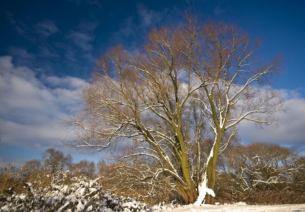 niederrheinischer Winter VI