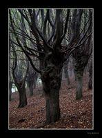 Niederwaldwirtschaft