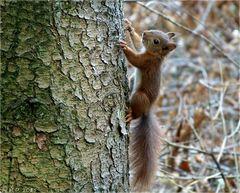 Niedlich war das junge Eichhörnchen....