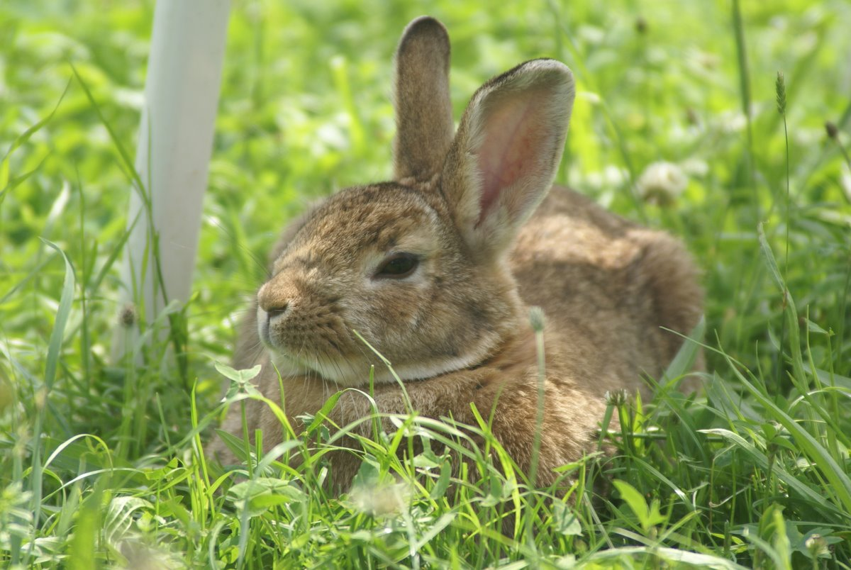 Niedliches Kaninchen im Gras