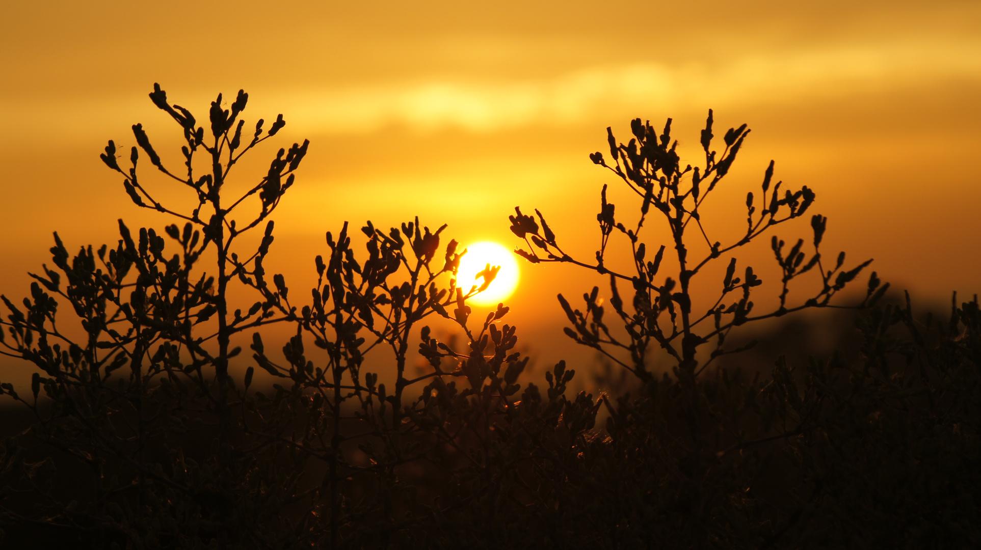 Nieheimer Sonnenuntergang
