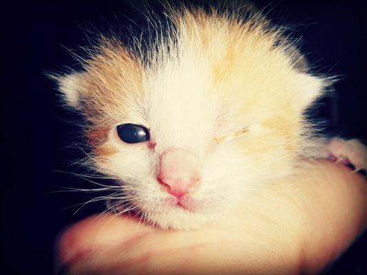 Niemand kann kleinen Katzenbaby's wiederstehen! ;)