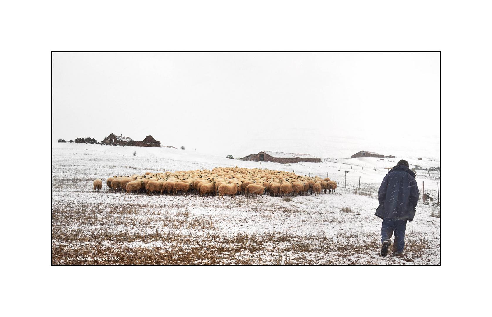 Nieva en las tenadas