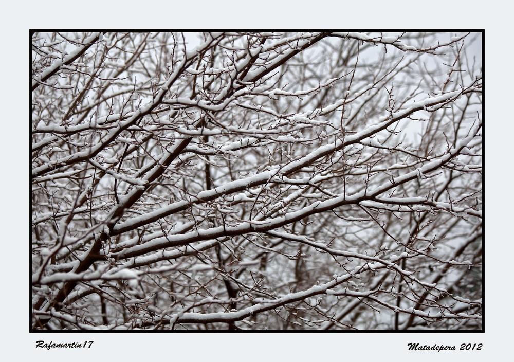 Nieve antes del frio