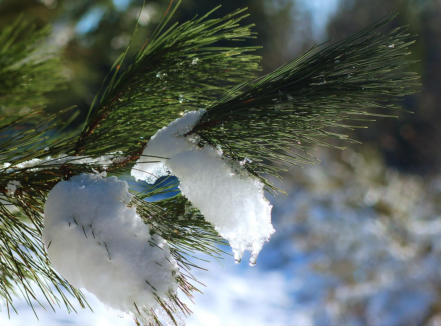 nieve en el arbol