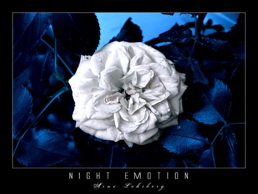 Night Emotion
