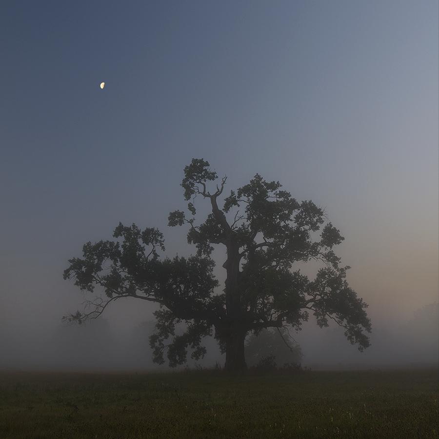 Night oak.