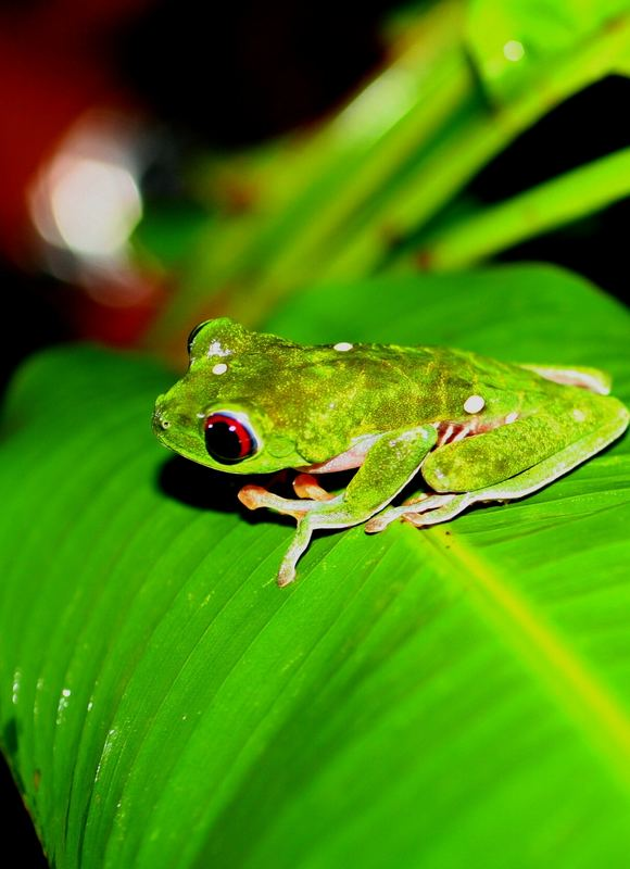 night picture of frog