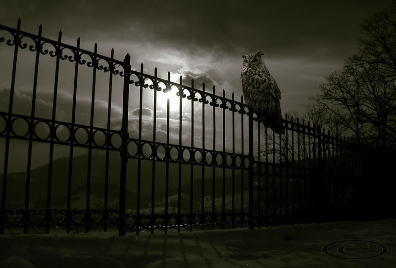 nightwatch...
