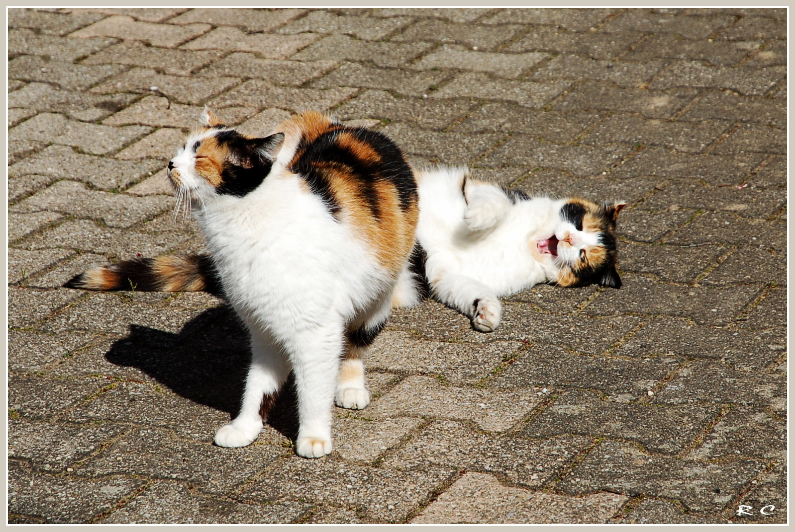Nikita & Lilou, je t'aime...moi non plus !!!