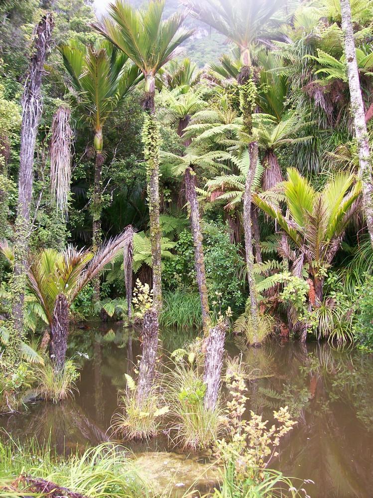 Nikkaupalmensumpf bei Punakaiki, Neuseeland