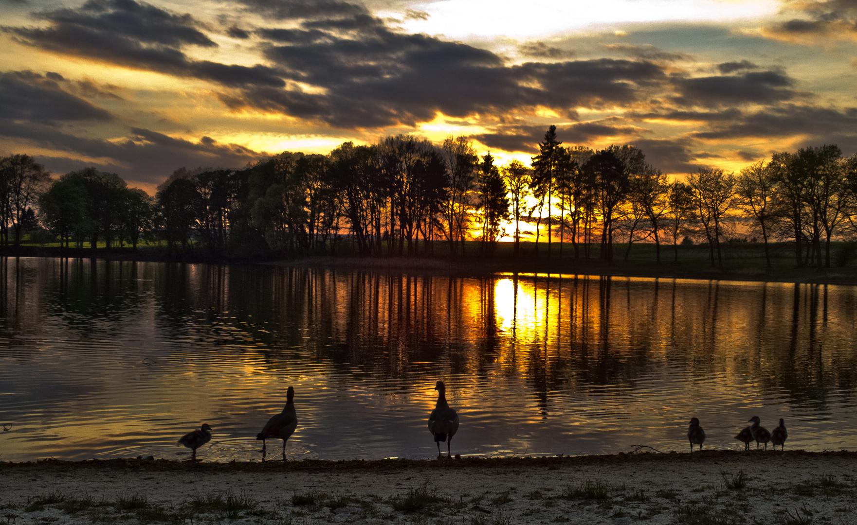 Nilgansfamilie schaut sich den Sonnenuntergang an...;-)