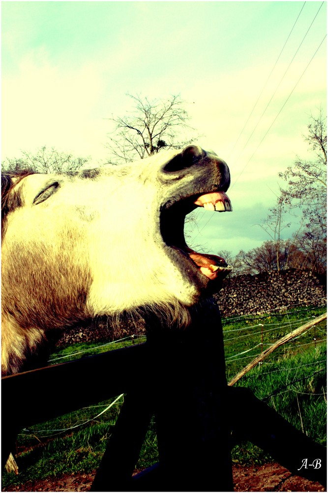 Nils, le cheval !