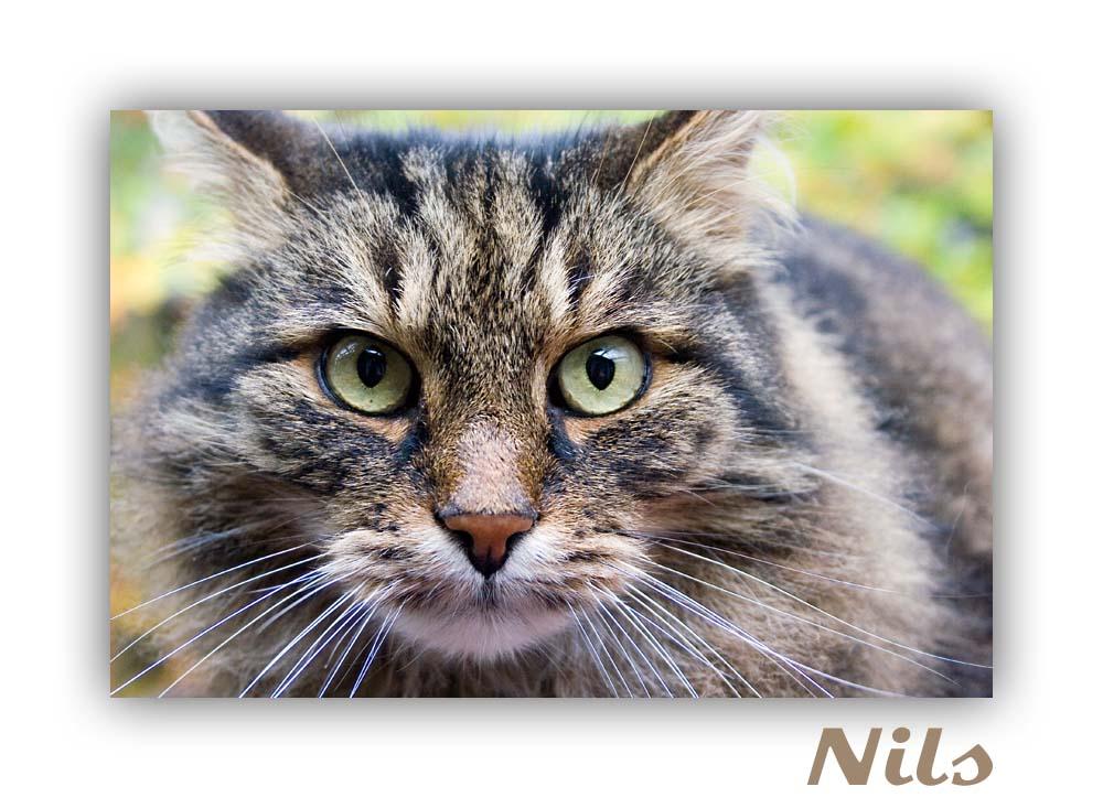 Nils - sieht wild aus, ist aber sehr anhänglich.