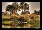Nilufer bei Luxor
