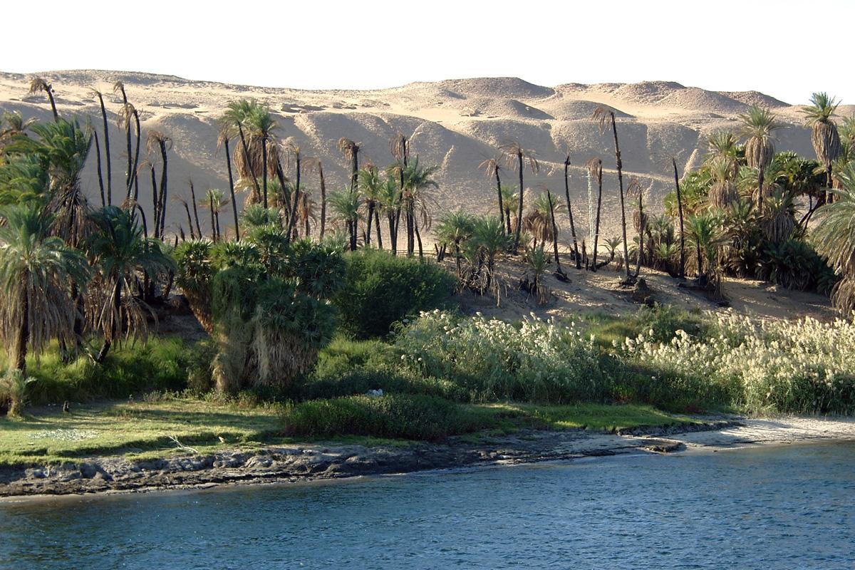 Nilufer in Ägypten