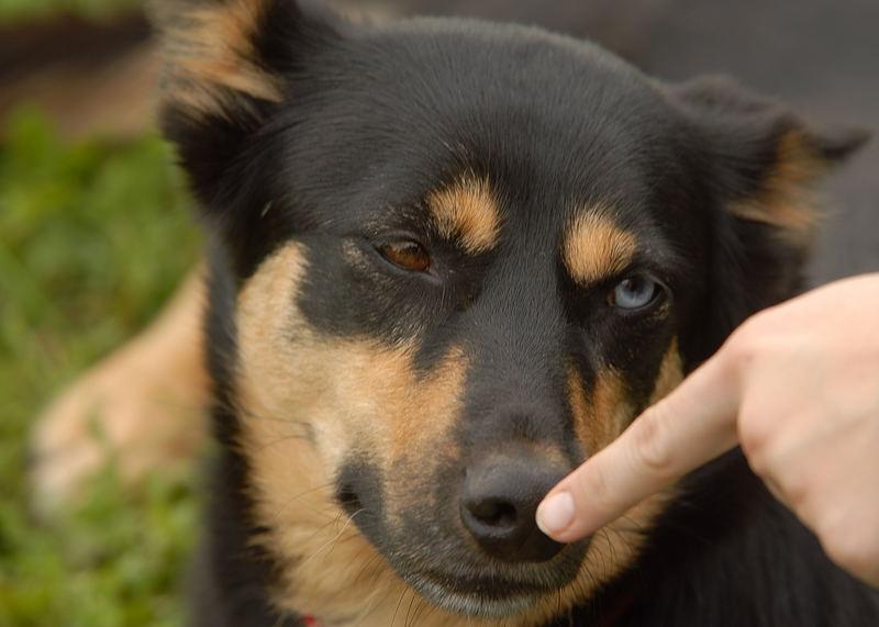 Nimm sofort den Finger von meiner Nase.....