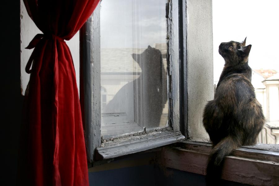 nina alla finestra