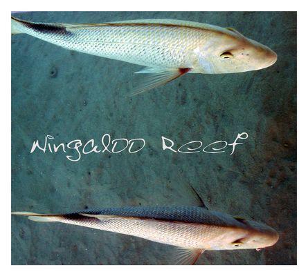 Ningaloo Reef - GRUNGE STYLE