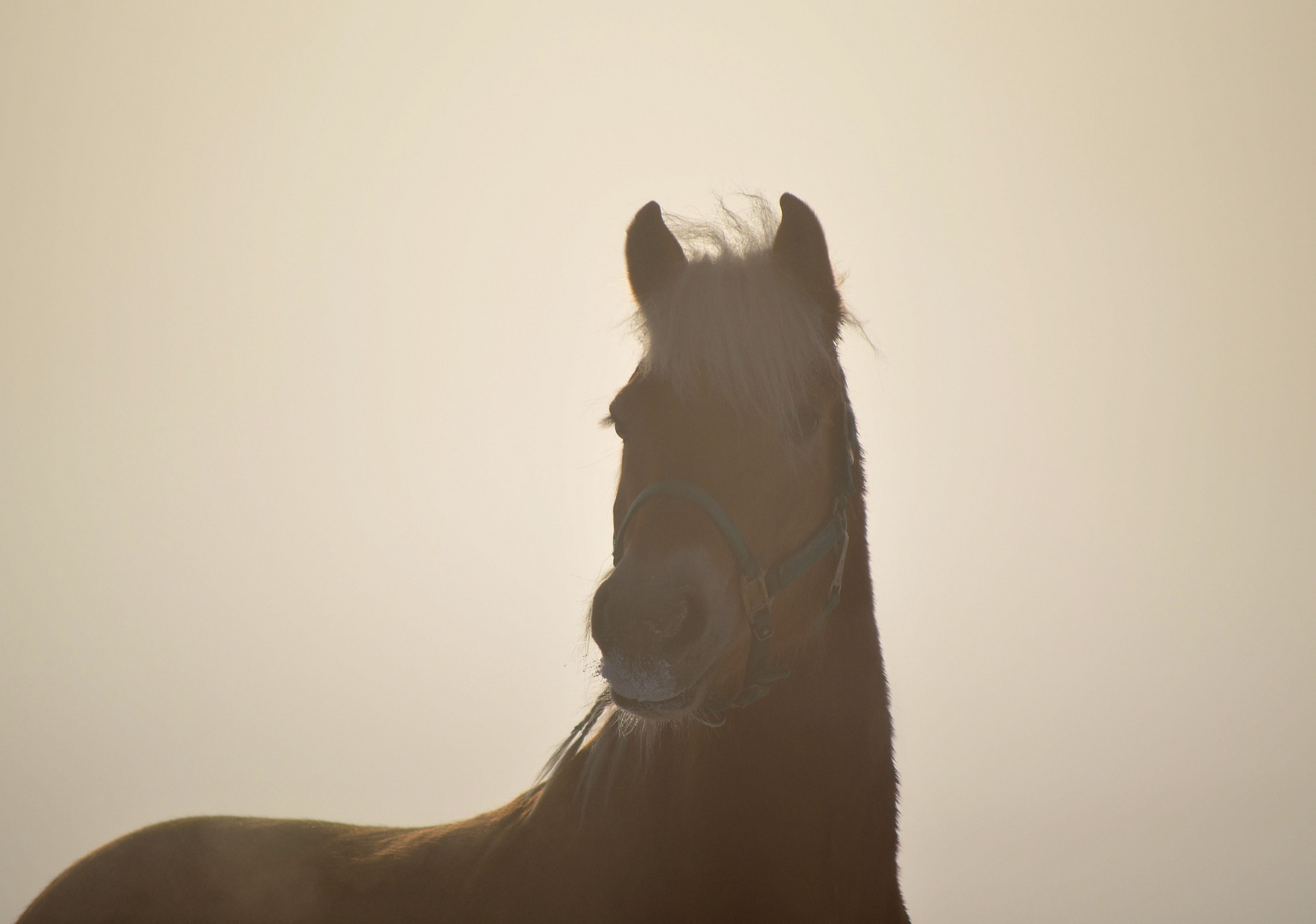 Nino im Morgennebel