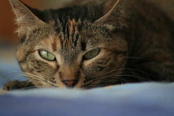 >> Nix als Katzenbilder... <<